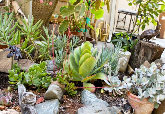 ms_bockle_succulent_garden_2015