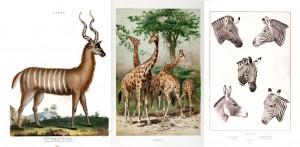 African Animals Vintage