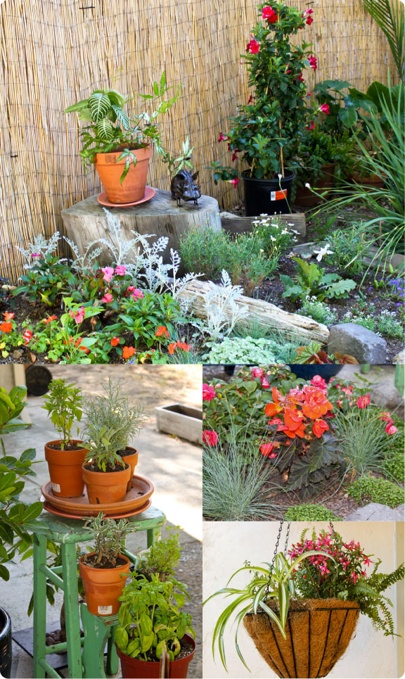 msbockle_may_gardening_projects