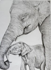 msbockle_may_elephants