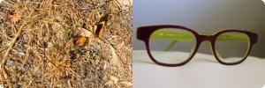 msbockle_newglasses_first