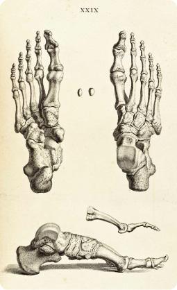 feet_bones