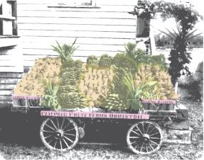 fruitcart