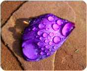 rainyday_purplepetal
