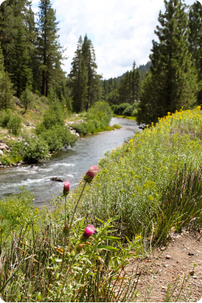 truckee_river