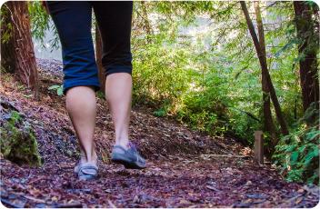 woods_hike