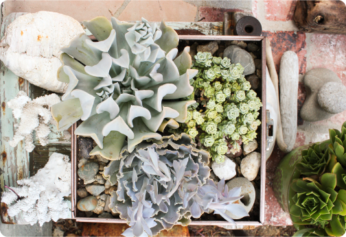 succulents_box