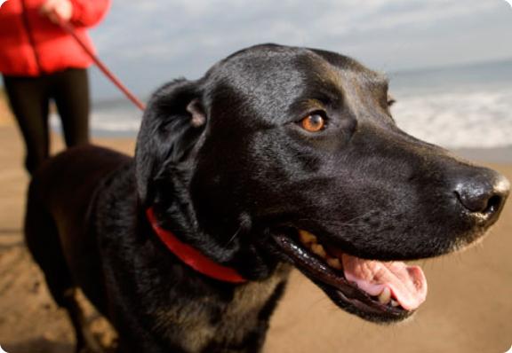 beach_dog