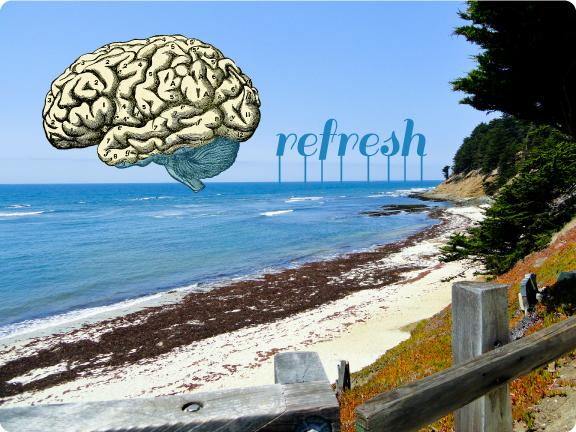 brain_ocean_refresh