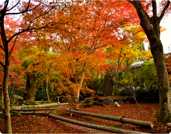 Autumn_foliage