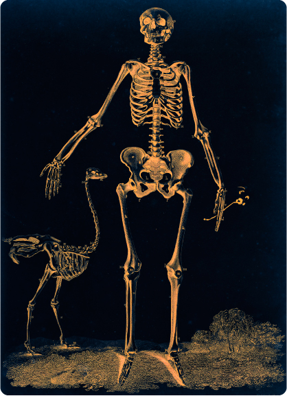 Female_skeleton_with_ostrich