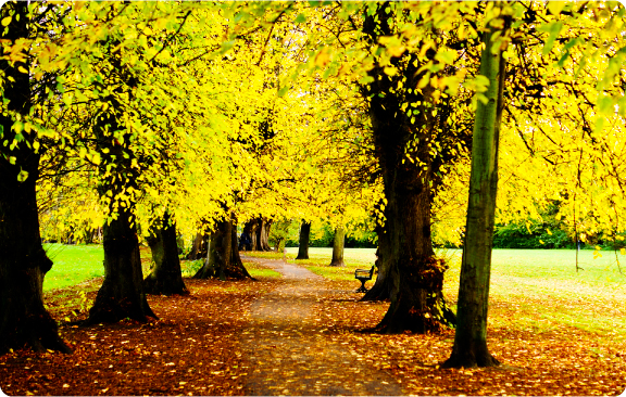 autumn_foliage_england
