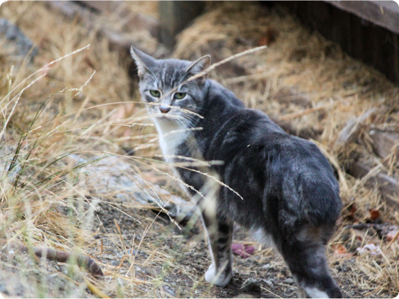 feral_cat