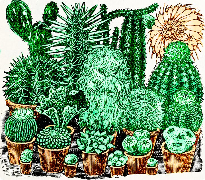 cacti_garden_colored