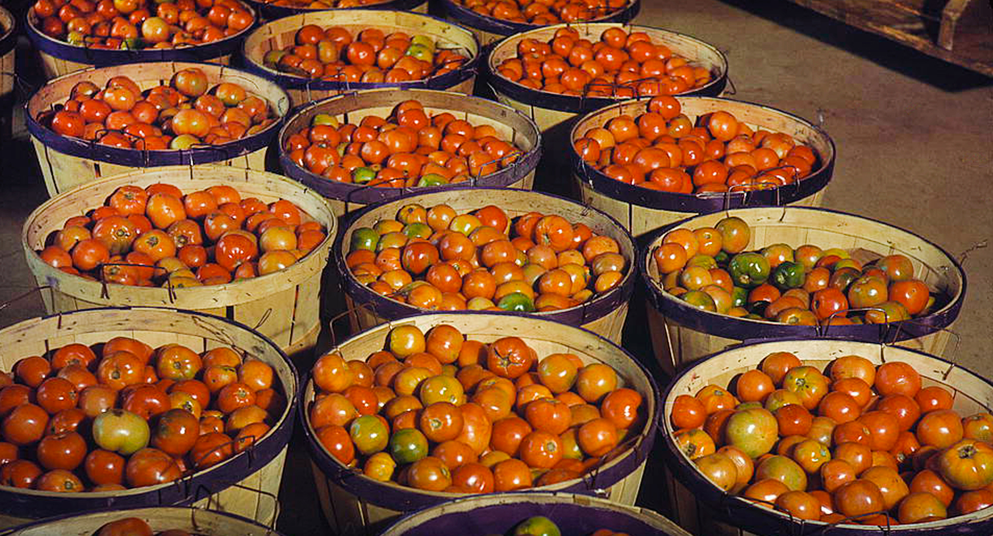 farm_fresh_tomatoes