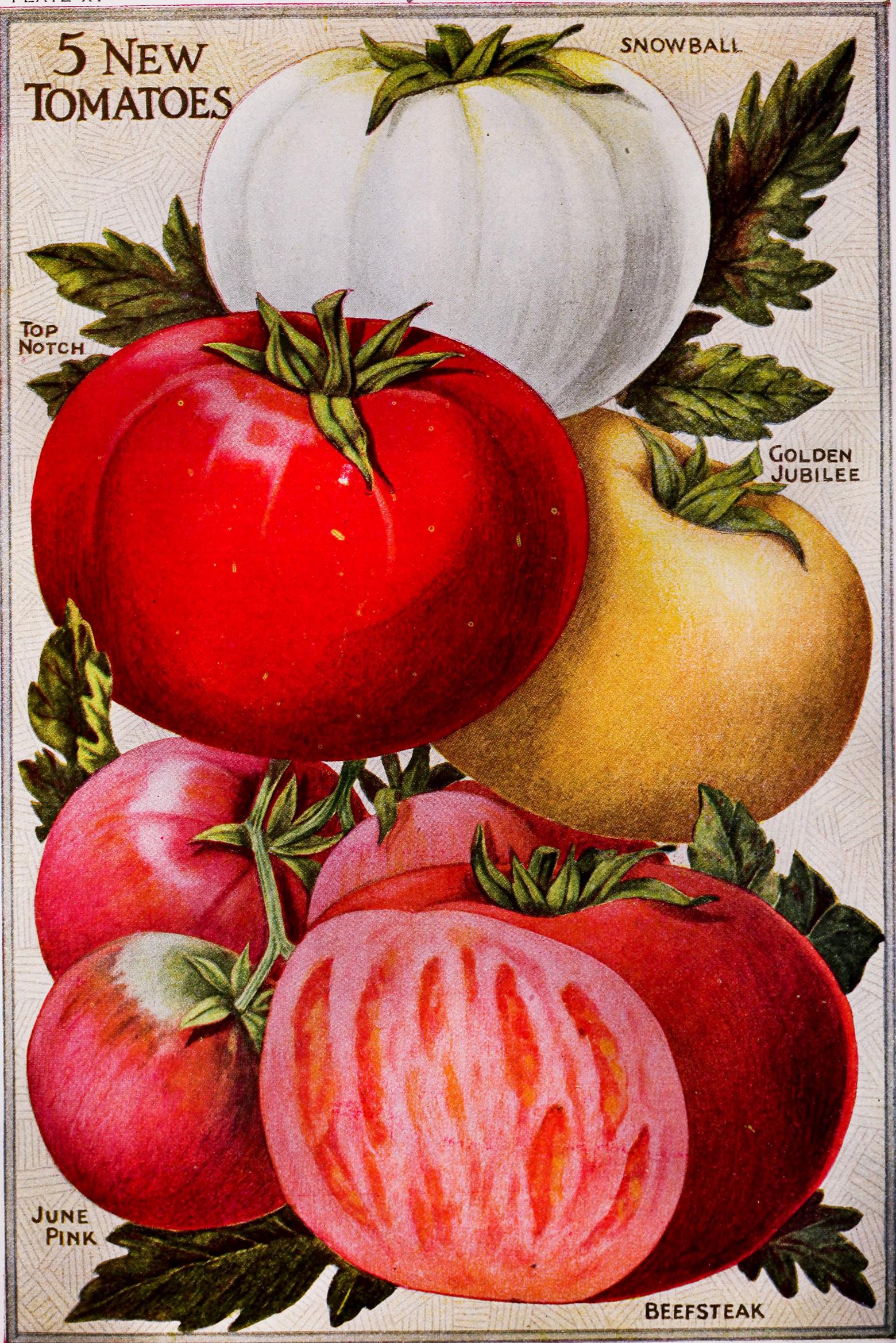 tomato_art