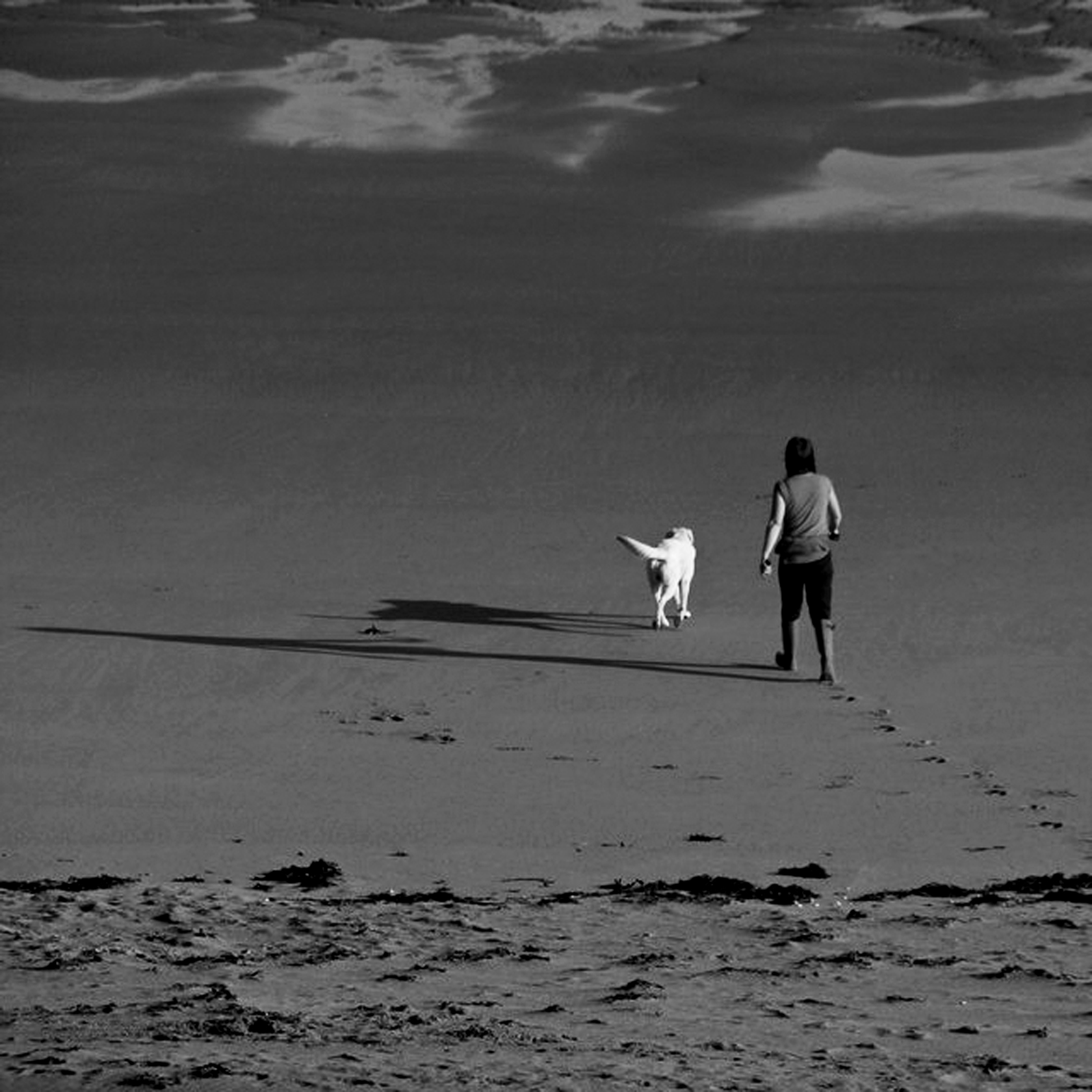 autumn_beach_dog_walking