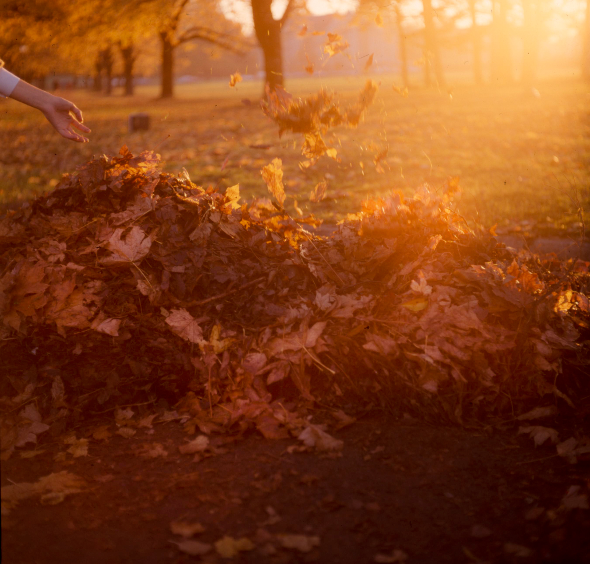 autumn_leaf_pile